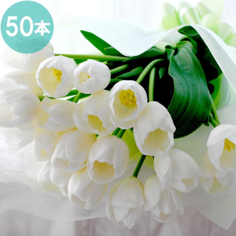 白いチューリップの50本の花束